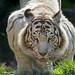 Amneville zoo gutschein