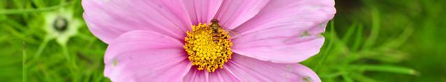 Ende Oktober 2016: Herbstlicher Spaziergang in Neckarhausen, um die selten gewordenen Sonnenstrahlen auszunutzen - Neckarfähre nach Ladenburg, altes Fährhäuschen ... hie und da noch vereinzelte Insekten auf leuchtenden Blüten ... Foto: Brigitte Stolle 2016