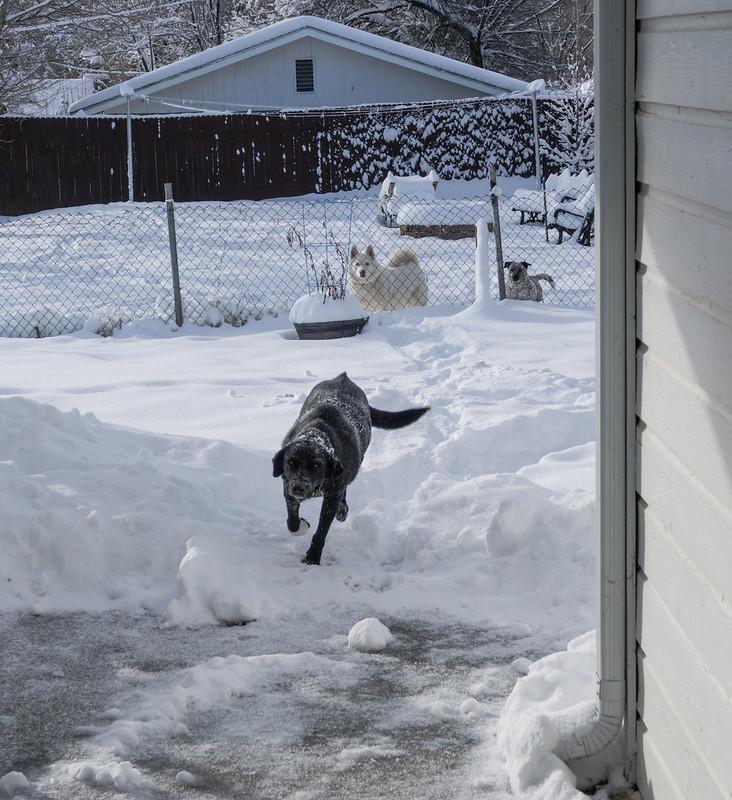 Shady Charging Through Snow