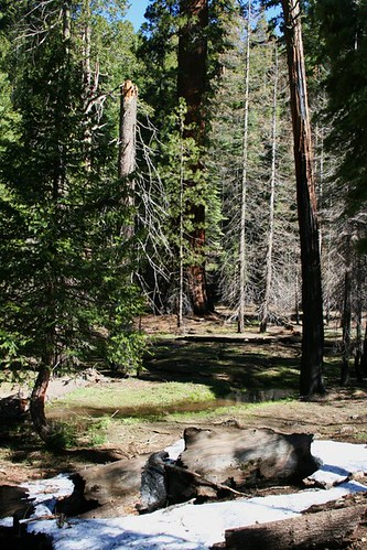 Hotels Around Yosemite National Park