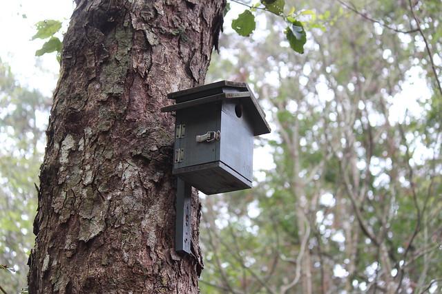 森林中的鳥巢箱。