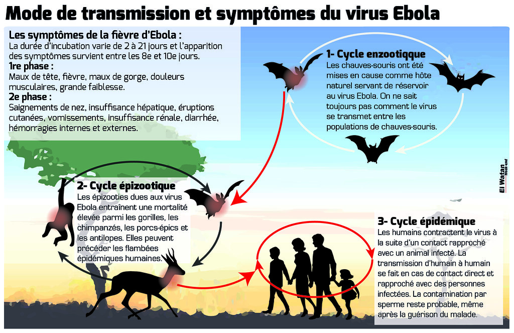 Mode de transmission et symptômes du virus Ebola ...