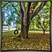 (136/365) Leaves of Fall Season / Meriden, CT