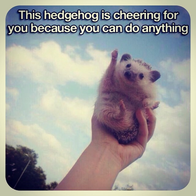 Hedgehog motivation SAT prep printables