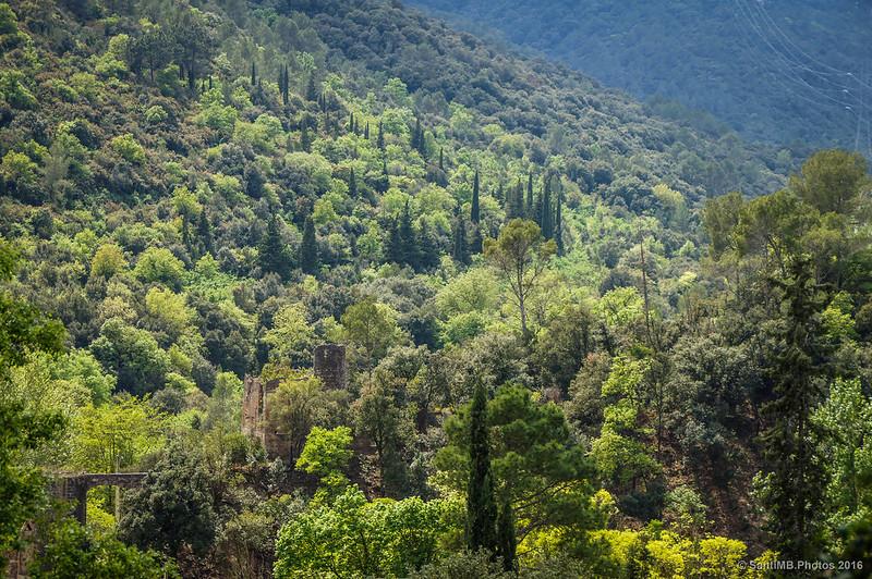 Vegetación del valle del río Glorieta