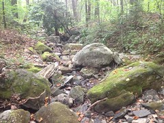 Upper Blood Mountain Creek
