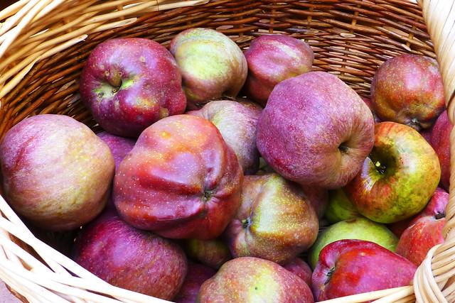 Alte Apfelsorten Himbeerapfel Herbst - Foto: Margit 2016