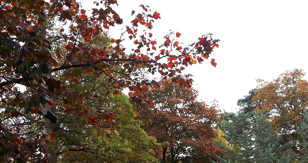 autumn-leaves-trees-red
