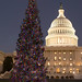 2006 U.S. Capitol Christmas Tree