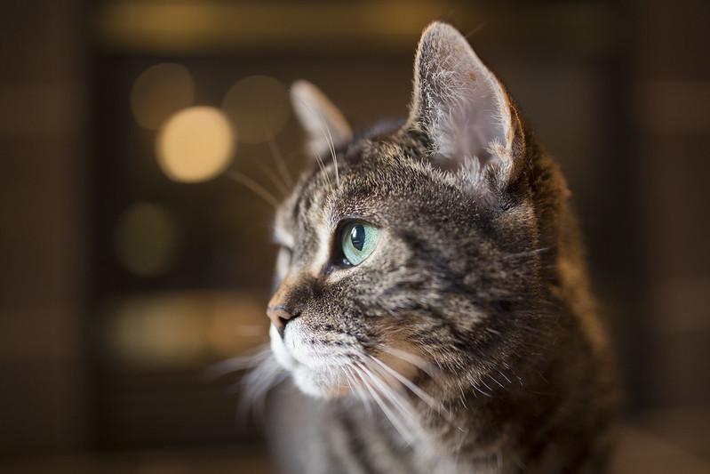 Generic Internet Cat Photo