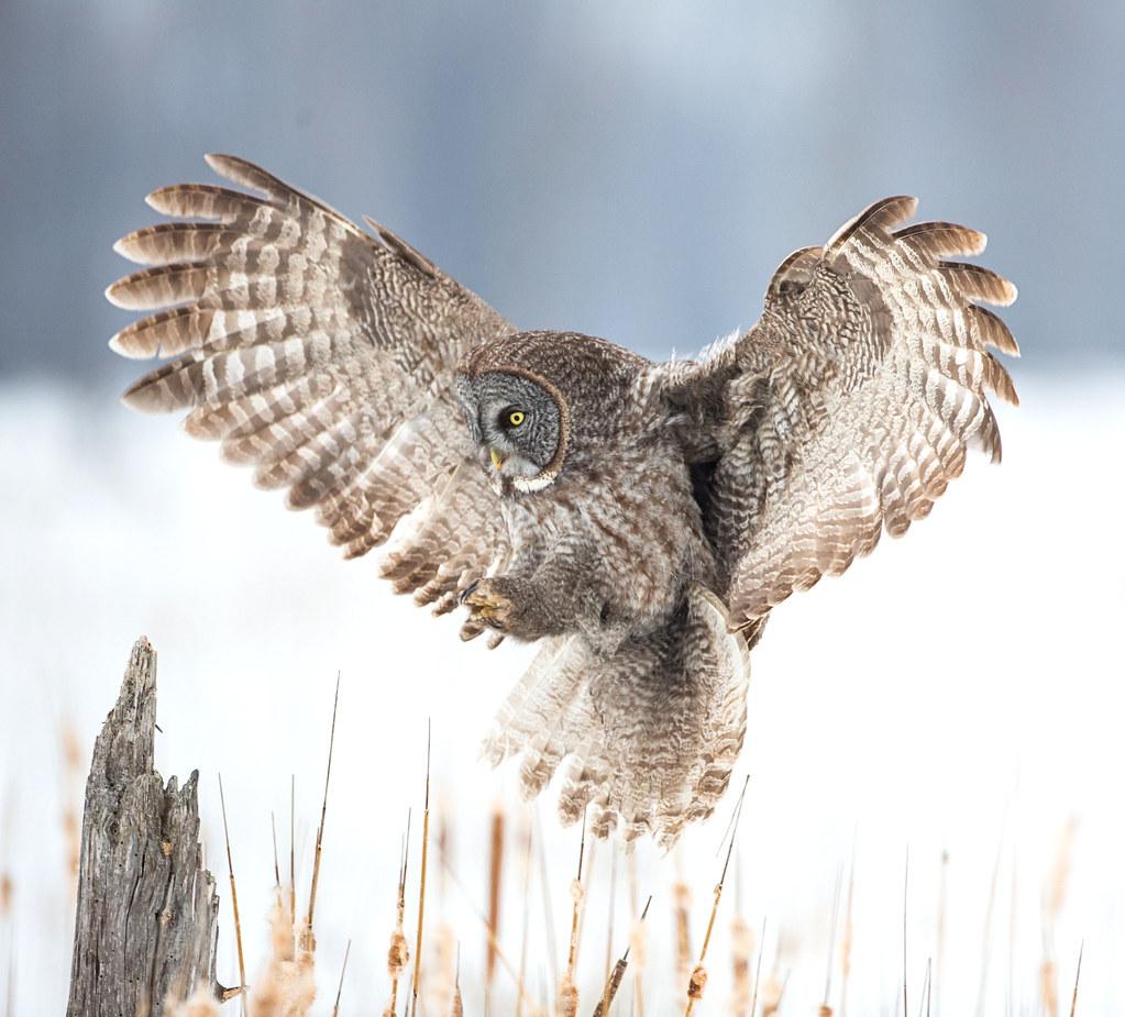 owl stop