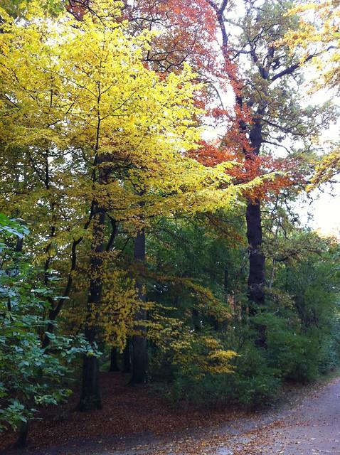 autumn colours in Søndermarken