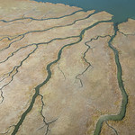 Dendritic marsh channels, Richmond, California