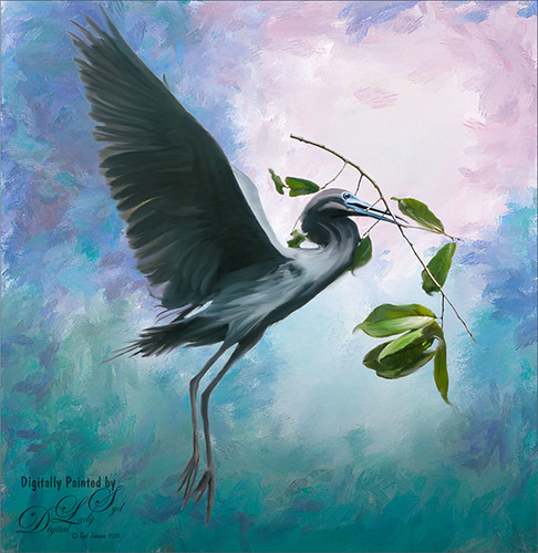 Image of Gray Heron flying with a twig