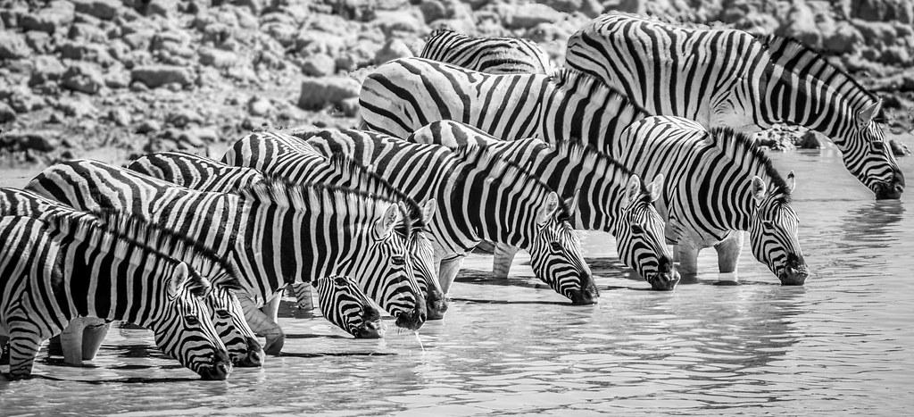 White stripes, Etosha Namibia