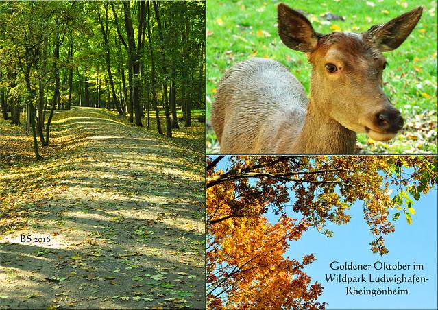 Wildpark Wildtierpark Ludwigshafen Rheingönheim Oktober 2016 ... Fotos und Collagen: Brigitte Stolle, Mannheim