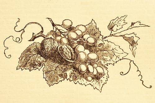 Walnüsse alte Zeichnung