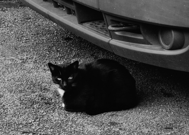 black cat under car
