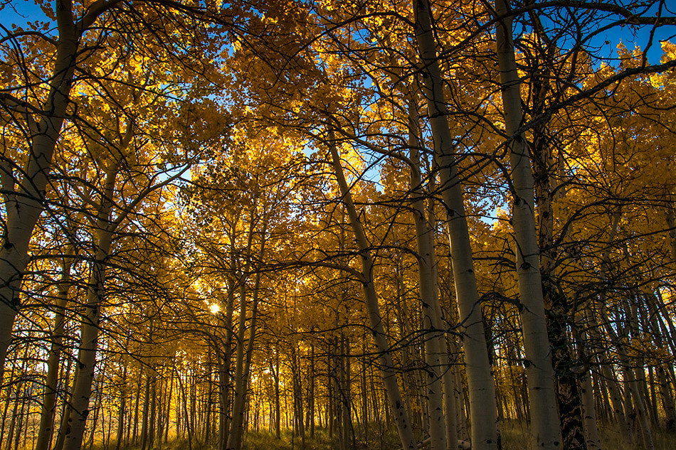 Aspens: South Park, Colorado