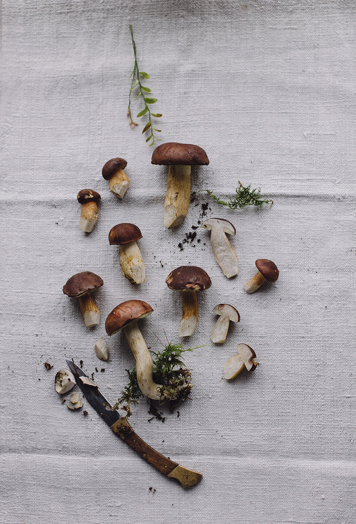 picking_mushrooms_by_Amelie_Niederbuchner_photographer_munich_IMG_0074ed