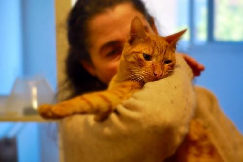 Jerry, gatito rubio guapo muy dulce y bueno, esterilizado, nacido en Abril´15 en adopción. Valencia. ADOPTADO. 23549986682_100e60ceb0