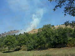 incendio contrada foresta 06