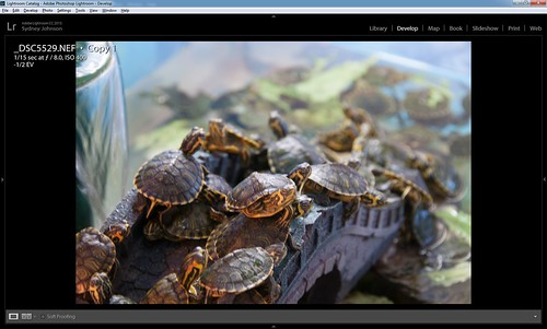 Camara Raw image of Turtles
