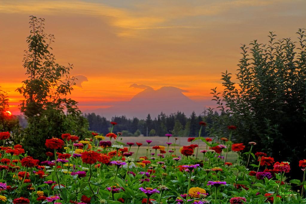 sunrise mountains flowers - photo #12