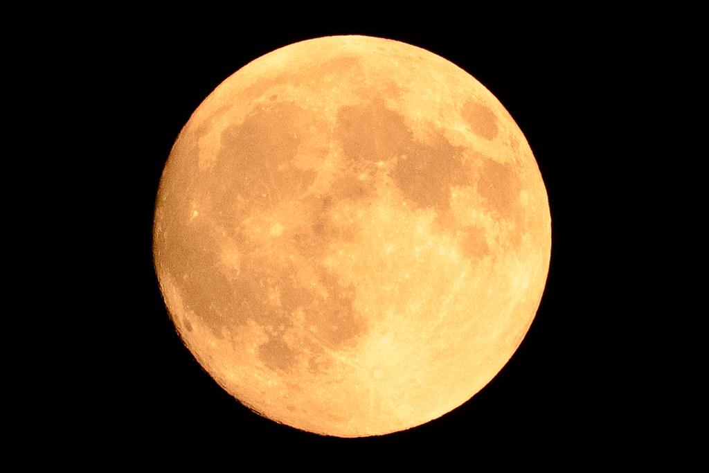 Harvest Moon Back To Nature Dog Intelligence Cheat