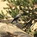 Feeding Fat Birds in Estes Park