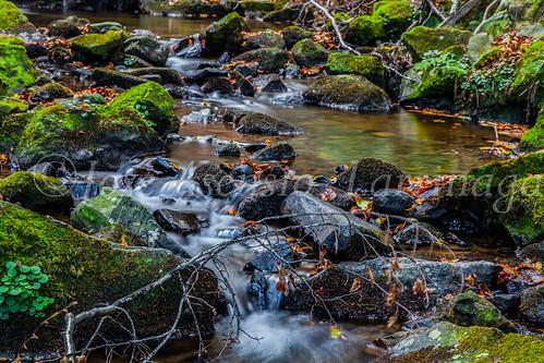 Parque Natural de #Gorbeia #DePaseoConLarri #Flickr      -1451