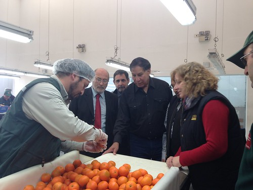 USDA Undersecretary Edward Avalos visits an inspection site at the Chilean airport where commodities are evaluated before shipment to overseas markets.  Here, he inspects fruit bound for U.S. market to ensure they are free from damaging pests.