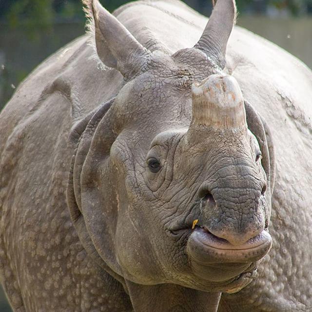 R Rhino Usage Warning Some #rhinos us...