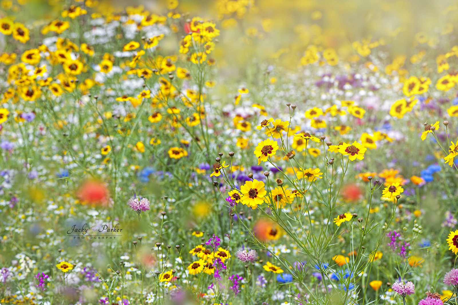 Wildflowers at Wisley by Jacky Parker