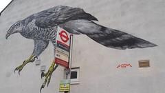 Bus top hawk