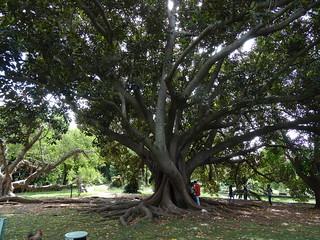 Jardín Botánico Tropical (Belém)