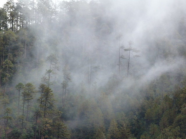 Bosque con niebla en el Tibet de Yunnan (China)