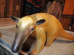 Golden Anteater