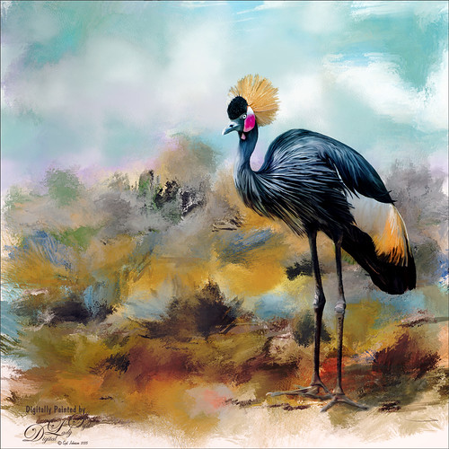 Image of a West African Crowned Crane