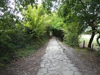 Pretty Path Through the Woods