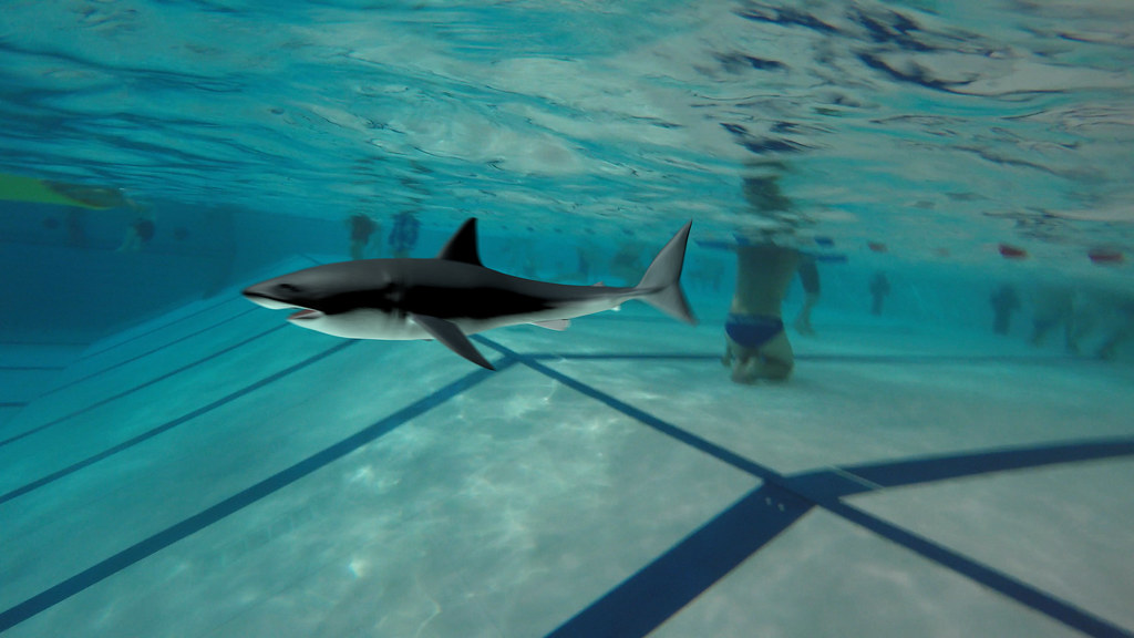A shark in our pool | Video still taken from an animation ...