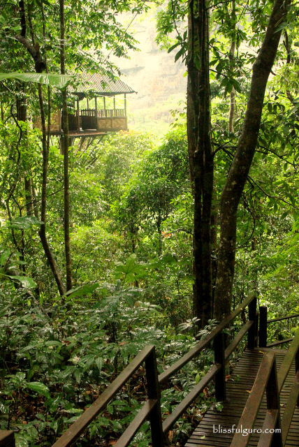 Green Discovery Treetop Explorer Paksong Laos Jungle Hotel