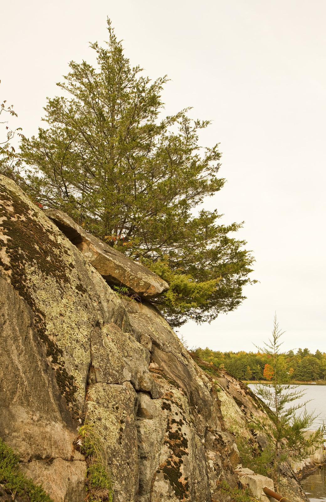 burleigh falls rocky tree