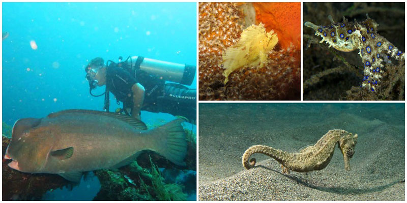 2bii-lovina-diving-via-vickidunlop,-zendivebali-,-indopacificimages