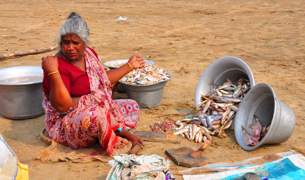 The catch from the sea is dumped on the beach. Here women sort the catch out, clean the fish and get it ready before it is picked up for sale.