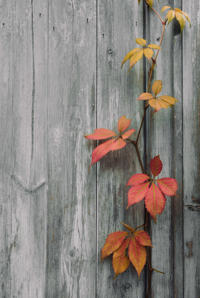 ombre leaves poking through door