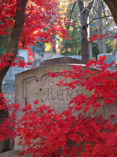 red japanese maple leaves against a tombstone mount pleasant cemetery