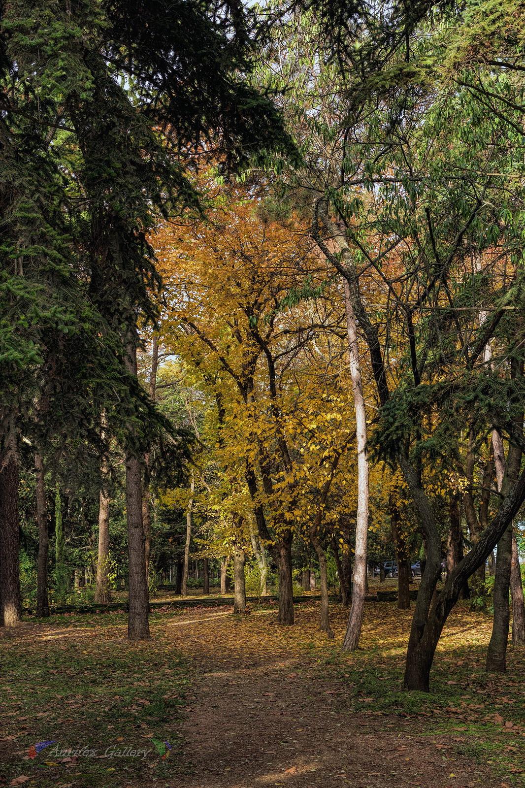 Parkpath in Autumn