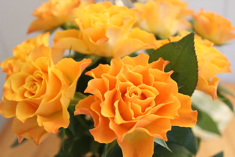 Roses / etdrysskanel.com