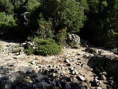 Les ruines de la bergerie de l'Ancinu sur le replat en bordure du ruisseau